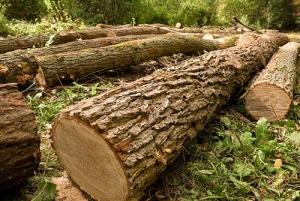 рязане на дървете